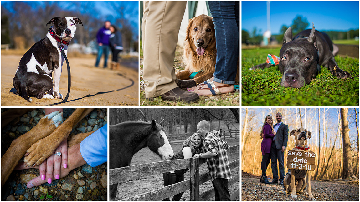 Maryland Wedding Photographers. Photos of dogs in engagement photos and a horse nibbling on a bride during an engagement shoot.